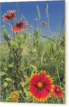Wood Print featuring the photograph Firewheels Galour by Lynnette Johns