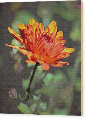 First Mum For Fall Wood Print by Sandi OReilly