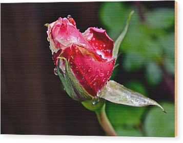 First Rose Wood Print by Bill Owen