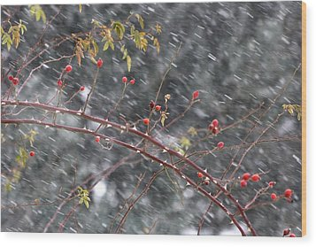 First Snow... Wood Print by Frederic Vigne