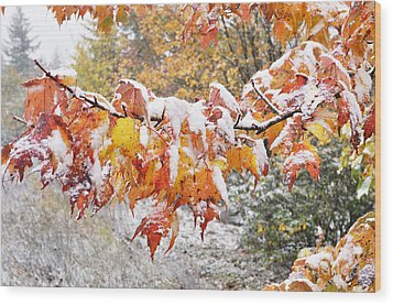 First Snow Wood Print by Thomas R Fletcher