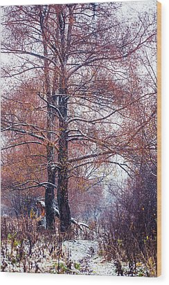 First Snow. Winter Coming Wood Print by Jenny Rainbow