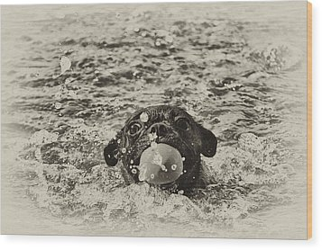 First Swim II Wood Print