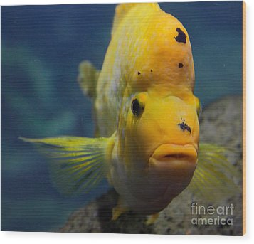 Wood Print featuring the photograph Fish by Milena Boeva