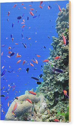 Fish On Tropical Coral Reef Wood Print by Carl Chapman