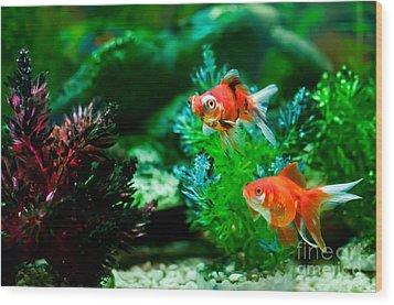 Wood Print featuring the photograph Fish Tank by Matt Malloy