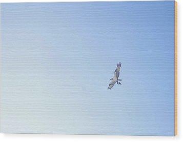 Fisher Eagle In Flight Wood Print by Fabian Jurado's Photography.