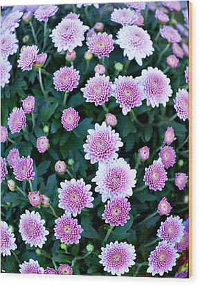 Fisheye Of Pink Flowers Wood Print by Malania Hammer