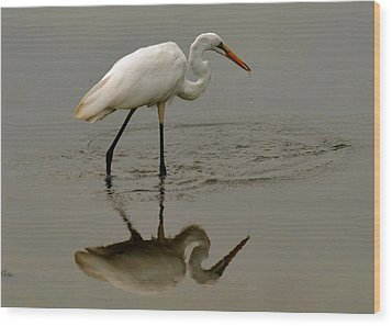 Fishing Egret With Droplets - C3282q Wood Print by Paul Lyndon Phillips