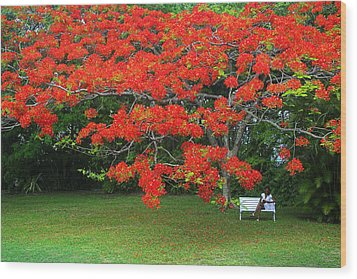 Wood Print featuring the photograph Flamboyant Tree- St Lucia by Chester Williams