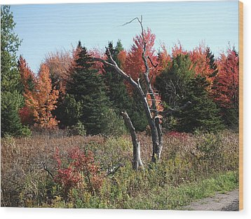 Wood Print featuring the photograph Flames Of Autumn by Christian Mattison