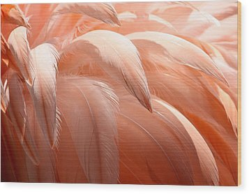 Flamingo Feathers Wood Print by Paulette Thomas