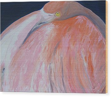 Flamingo Napping Wood Print by Kathryn Barry