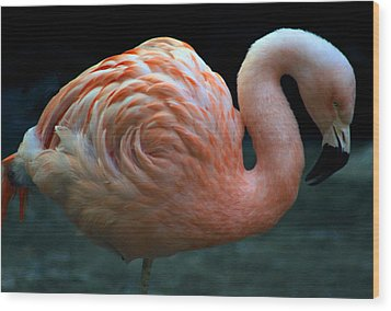 Wood Print featuring the photograph Flamingo by Tammy Espino