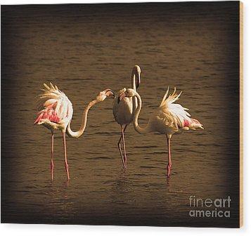 Flamingos Argue Wood Print by Radoslav Nedelchev