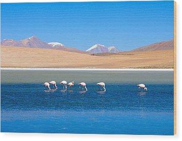 Flamingos At Lake Wood Print by Werner Büchel