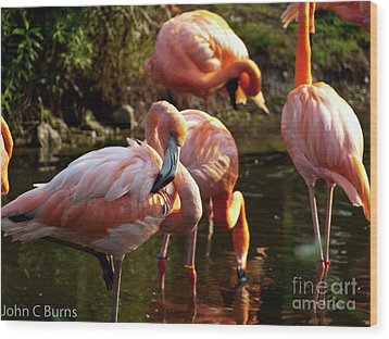 Wood Print featuring the photograph Flamingos by John Burns