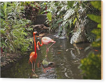 Flamingos Wades In Shallow Water Wood Print by Taylor S. Kennedy