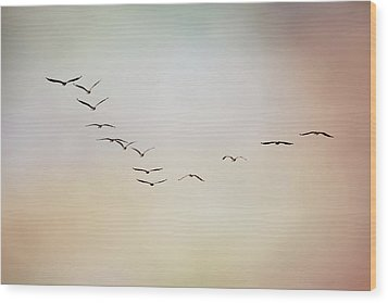 Flight Of Pelicans Wood Print by Daniela Duncan