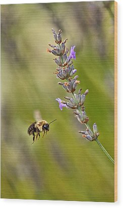 Flight Of The Bumble Wood Print by Karol Livote
