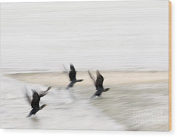 Flight Of The Cormorants Wood Print by David Lade
