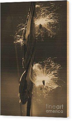 Flight Of The Milkweed Seed Wood Print by Julie Clements