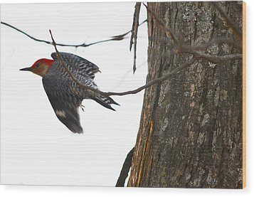 Wood Print featuring the photograph Flight Of The Woodpecker by Brian Stevens