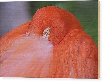 Flirty Flamingo Wood Print by Myrna Bradshaw