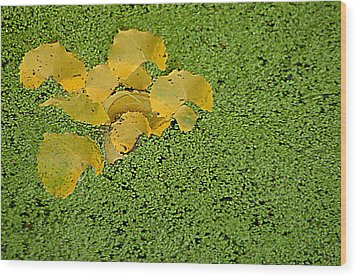 Floating Cottonwood Leaves Wood Print by Peg Toliver
