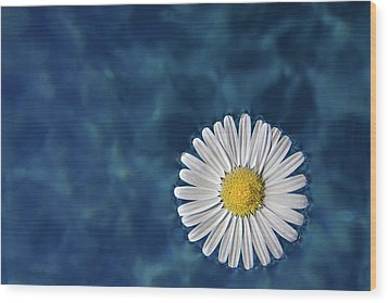 Floating Daisy Wood Print by Andrea Mucelli