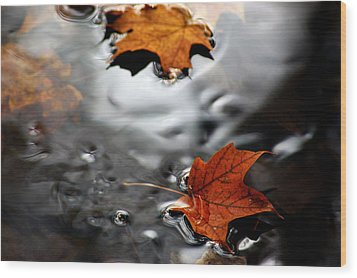 Floating Maple Leaves Wood Print by LeeAnn McLaneGoetz McLaneGoetzStudioLLCcom