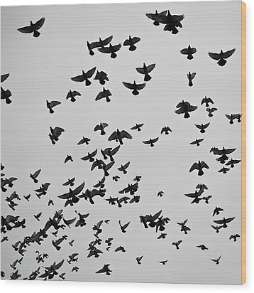 Flock Of Flying Pigeons Wood Print by Photography by Ellen L. Soohoo