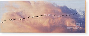 Flock Of Geese At Sunset Wood Print by Larry Ricker