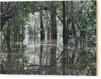 Flooded Amazon Rainforest Wood Print by Oliver J Davis Photography