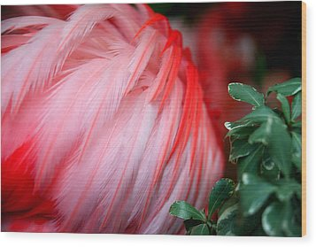 Wood Print featuring the photograph Flora And Fauna Number One by Lon Casler Bixby
