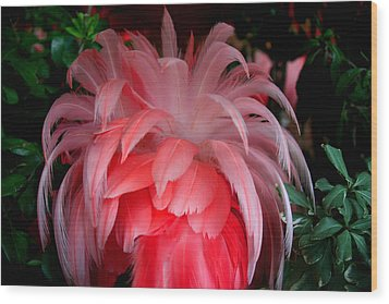 Wood Print featuring the photograph Flora And Fauna Number Two by Lon Casler Bixby