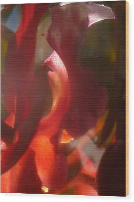 Floral Flamenco Wood Print by Paul Gladden