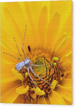 Floral Spider Wood Print by Mark J Seefeldt