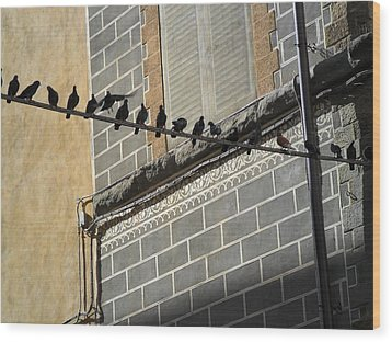 Wood Print featuring the photograph Florentine Pigeons by Laurel Best