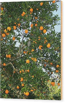 Florida Oranges Wood Print by Carol Groenen