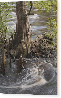 Florida Rapids Wood Print by Steven Sparks