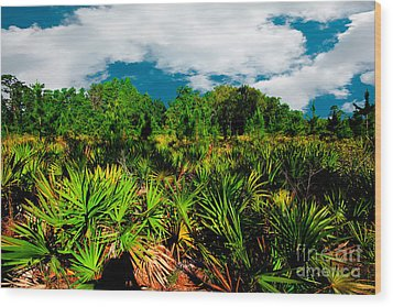 Florida Scrub 1 Wood Print by Carson Wilcox
