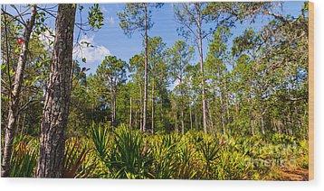 Florida Scrub 7 Wood Print by Carson Wilcox