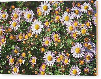 Flower Assault Wood Print by Jim Moore