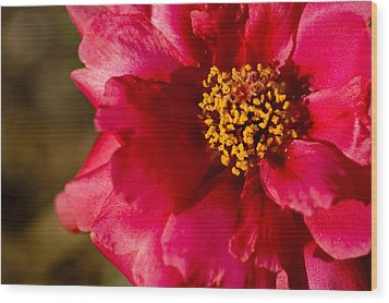 Wood Print featuring the photograph Flower Carpet Rose by Rob Hemphill