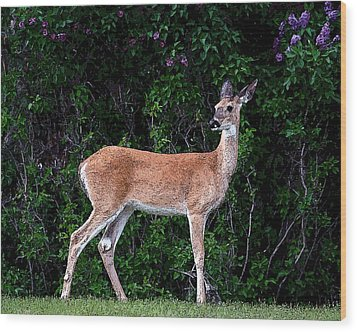 Wood Print featuring the photograph Flower Deer by Steve McKinzie