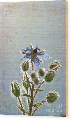 Flower Fuzz Wood Print