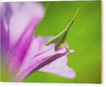 Flower Hopping Wood Print by Johan Larson
