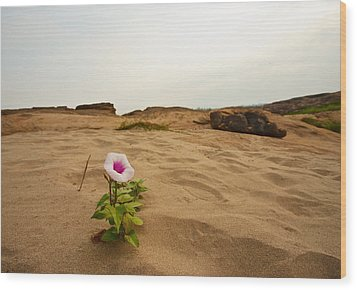Flower In Desert Wood Print by Panya Jampatong
