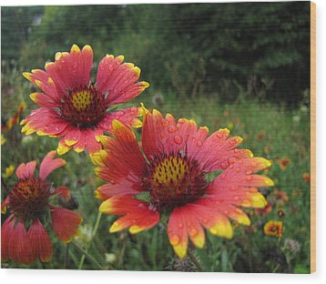 Wood Print featuring the photograph Flower by John Crothers